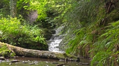 Waterfall scenic landscape - Shropshire England Stock Footage