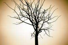 Horizontal sepia dry tree branch bokeh background Stock Photos