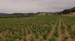 Aerial Grape field, farm Stock Footage