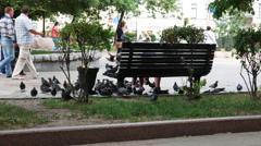 People Feeding Pigeons in the Park Stock Footage