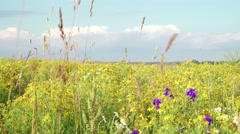 Clouds Pass Over Wild Blue Yellow and White Bonnet Wildflowers Stock Footage