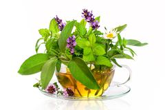 Teacup with fresh healing herbs Stock Photos