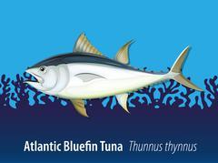 Atlantic bluefin tuna in the sea Stock Illustration