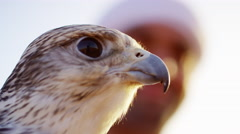 Middle Eastern falconer in desert with his bird of prey Stock Footage