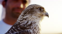 Tethered falcon on gloved wrist of male Arab owner Stock Footage