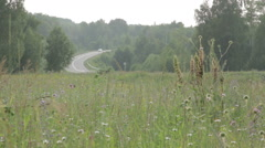 Highway through dense forest road on sunny day. Stock Footage