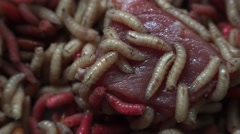 Maggots with meat, 4k, uhd.Fat insect larvae,larva of meal worm. Stock Footage