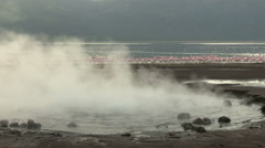 Huge flock of Lesser Flamingo with hot water geysers, Lake Bogoria Kenya Stock Footage