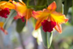 blurry defocused of yellow red orchid for background - stock photo