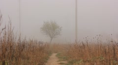 Autumn tall grass prairie in fog Stock Footage