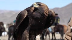 GOLDEN EAGLE Stock Footage
