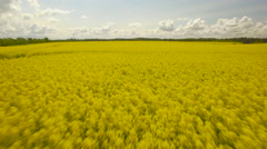 Oilseed Rape Field Against Sky Stock Footage