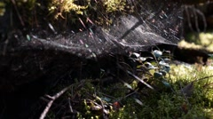 Spiderweb in the Wood - stock footage