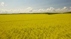 Oilseed Rape Field Against Cloudy Sky Stock Footage