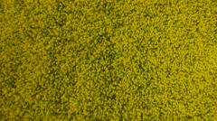 Drone Footage Of Oilseed Rape Field - stock footage