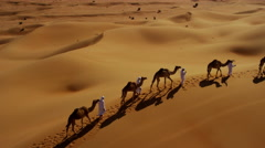 Aerial drone of Middle Eastern male camel owners in desert convoy Stock Footage