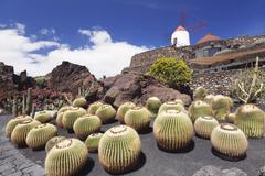 Cactus garden Jardin de Cactus by Cesar Manrique, wind mill, UNESCO Biosphere Kuvituskuvat