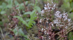 The small white flower plant on the forest Stock Footage