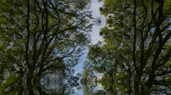 Distorted view trees in forrest - stock footage