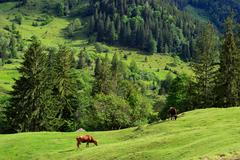 Dzembronya Village, Carpathian Mountains, Ivano-Frankovsk Region, Ukraine - stock photo