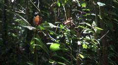 Peruvian rainforest Stock Footage