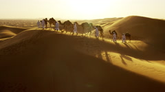 Aerial drone of camels being led by handlers across desert sand dunes - stock footage