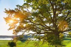 Sunlit tree and lake, Osterseen, Bavaria, Germany Stock Photos