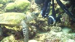 Feeding a Hawksbill Turtle Stock Footage