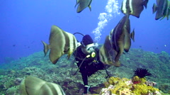 Diver with Batfish Stock Footage