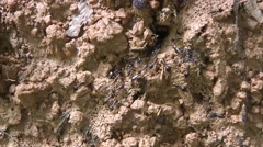 Termites, Laos Stock Footage