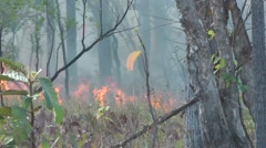 Grass fire, Cambodia Stock Footage