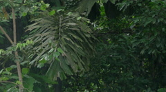 Rainy day in the Peruvian rainforest Stock Footage
