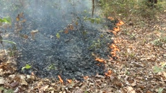 Leaf litter fire, Cambodia Stock Footage