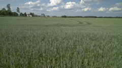 The landscape shot of the whet field Stock Footage