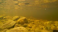 Tambopata river, underwater footage Stock Footage