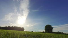 Green field panoramic shot. Camera tilt and pan. Moving head. Stock Footage