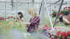 4K Customer shopping in garden center, workers tending plants in background Stock Footage