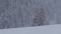 Snow covered pine trees Stock Footage