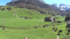 Cows in Swiss Alps Appenzell Switzerland Stock Footage