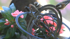 Young chickadees on a metal garden ornament Stock Footage