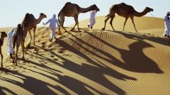 Middle Eastern Dromedary camels on Safari in desert sand dunes Arabia Stock Footage