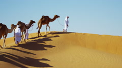 Camels being led by handlers travelling across desert sand dunes Stock Footage