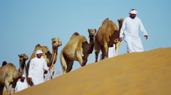 Arab Bedouin male in traditional dress resting camels in hot desert Stock Footage