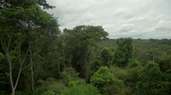 Peruvian rainforest, panoramic view Stock Footage