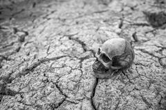 Skull on dry cracked ground. - stock photo