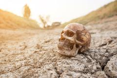 Skull on dry cracked ground - stock photo