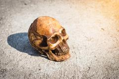 Skull on dry bagkground. Stock Photos