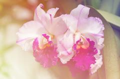 Orchid flower Stock Photos