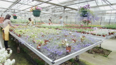 4K Time lapse customers & staff in garden center greenhouse Stock Footage
