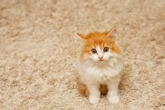 Cute red kitten looking up Stock Photos